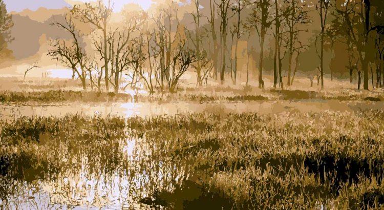 Het eiland in de mist